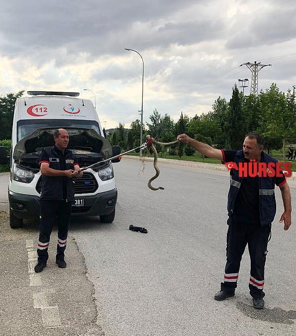 2021/07/ambulansa-giren-yilani-itfaiye-cikardi-27cfcd494cba-1.jpg