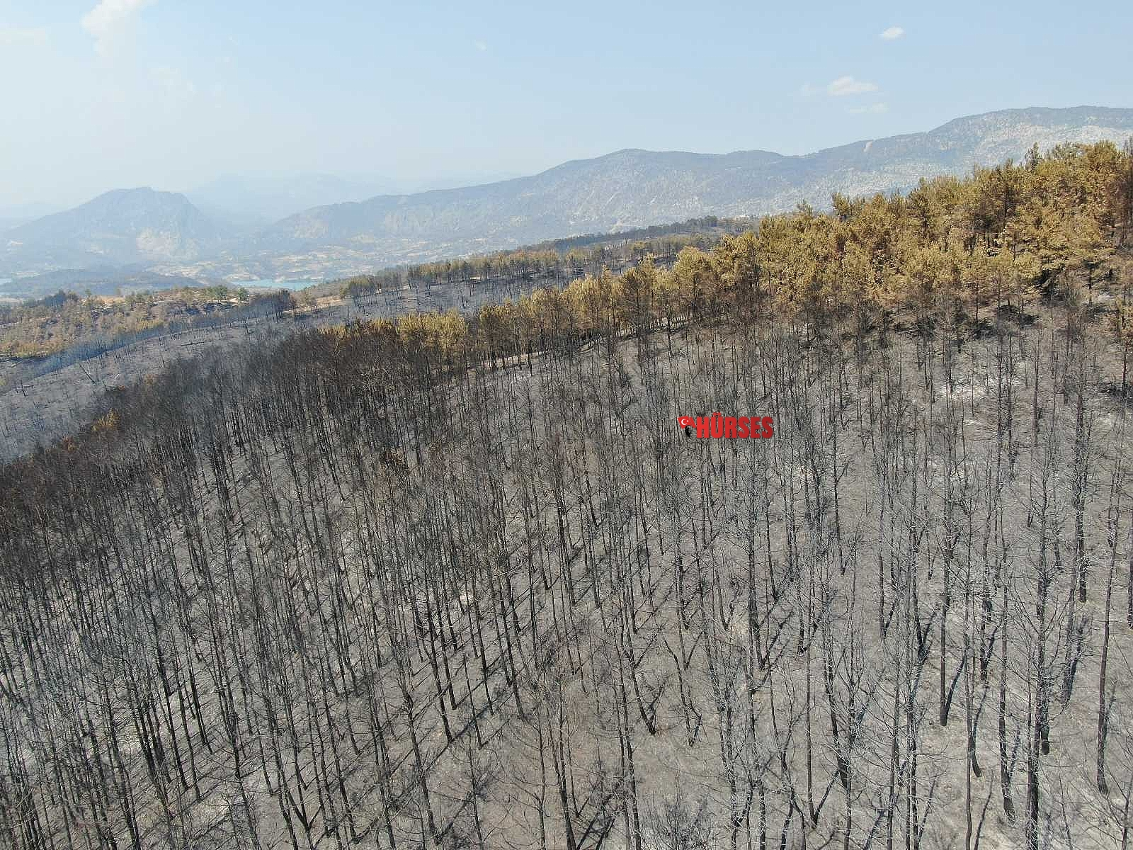 2021/09/manavgatta-yanan-alanlara-keciboynuzu-ekilsin-onerisi-20210923AW42-1.jpg