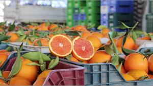 'Doğal afet nedeniyle portakal fiyatı artacak'