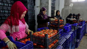 Tanzim satışa 1000 ton sebze