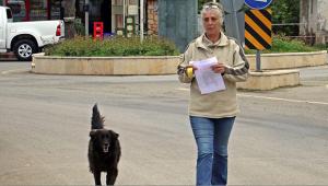 Kaybolan köpeğini köpeklerle arıyor