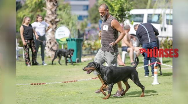 Irk köpekler Antalya'da yarıştı