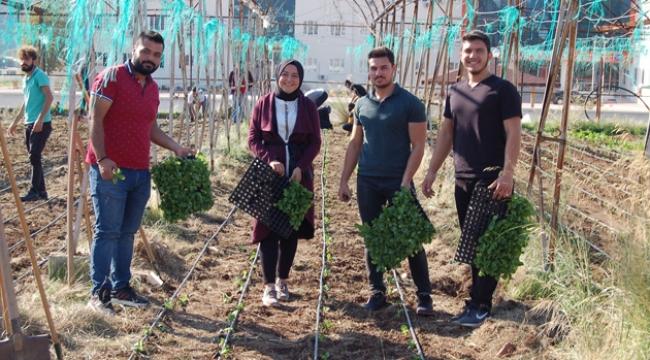Öğrenciler kışlık sebze ekimi yaptı
