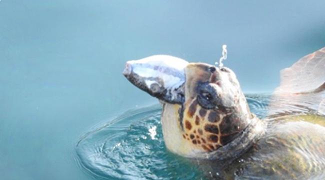 Vali Karaloğlu'ndan balon balığı paylaşımı
