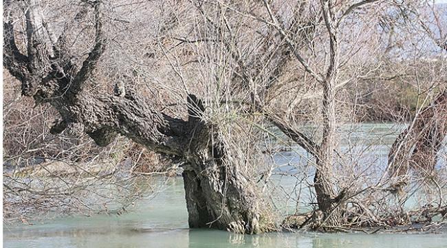Ağaçta mahsur kaldılar