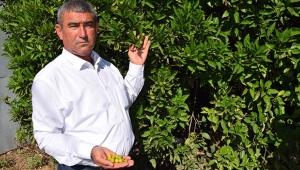 Çöl sıcağı mağduru çiftçilere destek