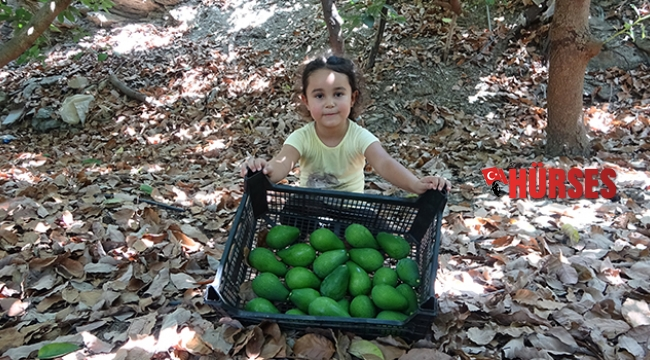 Avokadoda hedef 70 milyon adet
