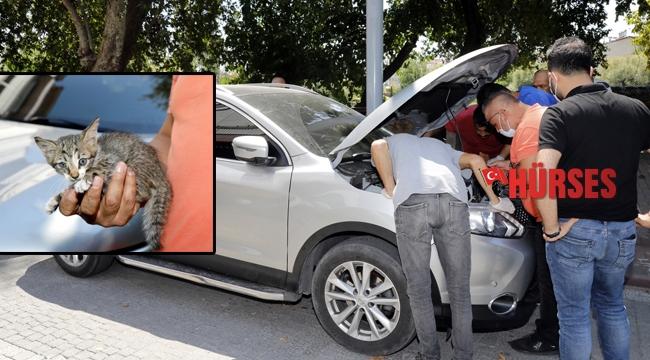Cipin motoruna giren yavru kedi kurtarıldı