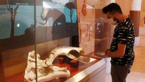 İki milyon yıllık fosiller, burada sergileniyor