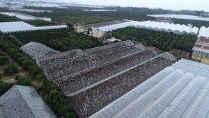 Antalya'da zarar gören seralar havadan görüntülendi