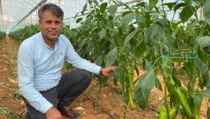Antalyalı çiftçiler yerli ve milli tohumla üretiyor