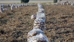 Korkuteli'de patates hasadı başladı