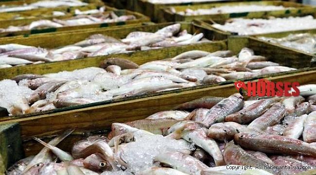 FAO uyardı: Akdeniz ve Karadeniz'deki avcılığın 230 bin tonu ıskarta