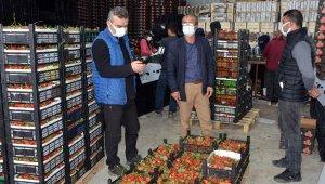 Serik'ten yurt dışına çilek ihracatı