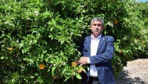 'Portakalı sigortalayın' uyarısı