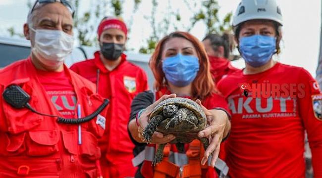 Uçurumun kenarında sıkışan kaplumbağayı AKUT kurtardı