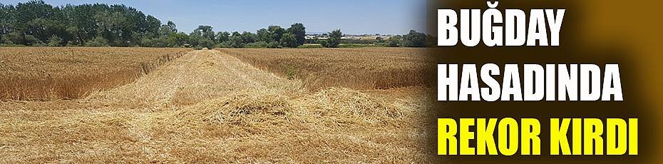 Buğday hasadında rekor