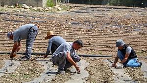 Çandır Fasulyesi'nin üretimi 15 kat arttı