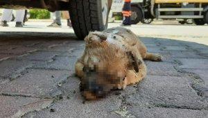 5 yavru köpek katledildi, hayvanseverler isyan etti