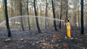 Yangında 7 hektar ormanlık zarar gördü