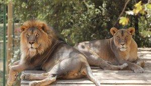 Hayvanat Bahçesi'nde hedef 1 milyon ziyaretçi