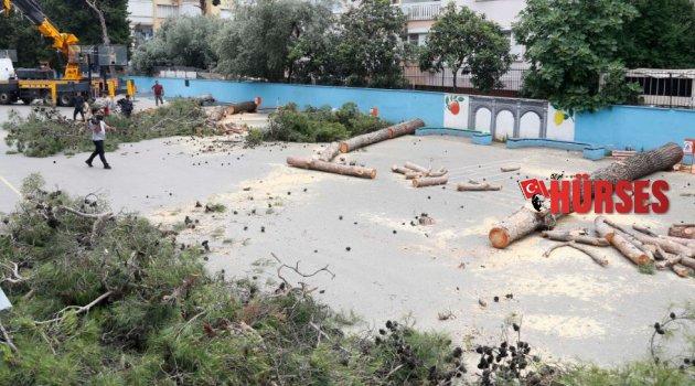 'Alerji yapıyor' diye ağaçları kestiler