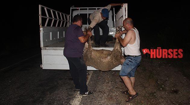 Alkollü sürücü koyunlara çarptı