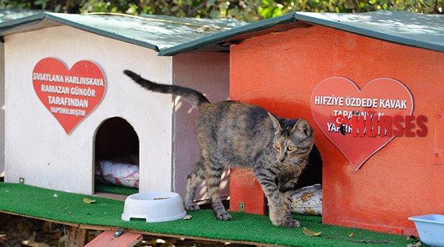Kedilere renkli yaşam merkezi