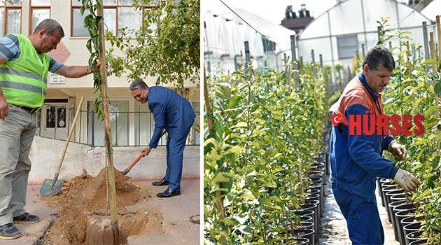 Muratpaşa'dan ücretsiz fidan