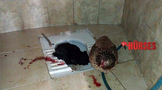 Mezarlık tuvaletinde ölü tavuk bulundu