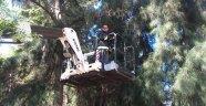 Ağaçta mahsur kalan kedi kurtarıldı