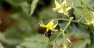Dünya'nın arısı Antalya'dan