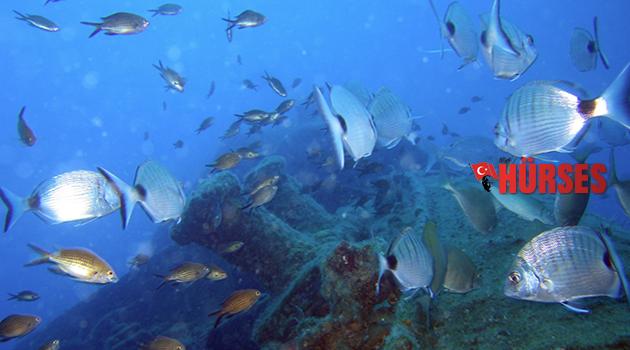 Turizm gelirinin yüzde 20'sini denizden