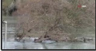 Manavgat Irmağı'nda ağaca takılı erkek cesedi bulundu