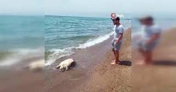 Antalya'da caretta caretta ölüsü sahile vurdu