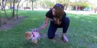 İnternetten 15 bin liraya aldIğı köpek kalp hastası çıkınca şikayetçi oldu