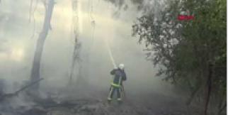 Kemer'de orman yangını